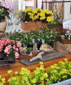 田原のお花